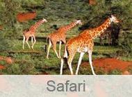 Safari in der Türkei